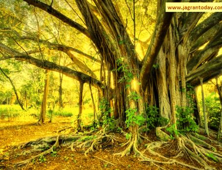 बरगद के पेड़ से वशीकरण